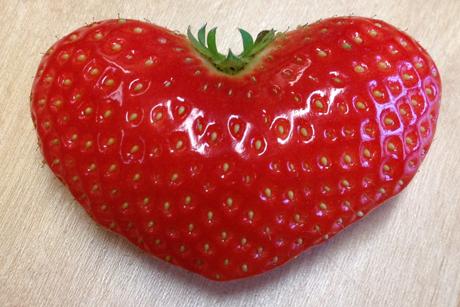 Frucht der Liebe01